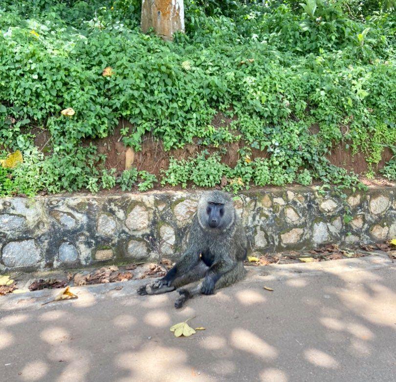 Animals seen near Fort Portal, Uganda